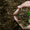 World Soil Day 2020 celebrates the biodiversity of the soil